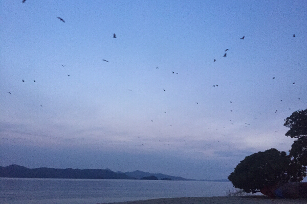 At exactly 6PM, the bats that nest on the island all flew together back to the main Coron island. They do this at exactly the same time each day and return next day. Super fascinating.