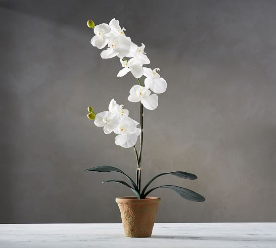 20. Pottery Barn, Faux Potted Orchid, P3450