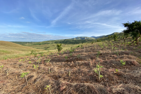 Globe - Mead Foundation Reforestation site_ upland area in Iba, Zambales copy